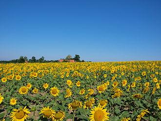 Počinje popis poljoprivrede Srbije